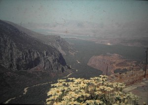 near Delphi there is a famous Olive plantation. the Olivegardens of Amphissa. July 1965.